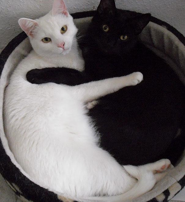 Μαύρες και άσπρες γάτες (11)
