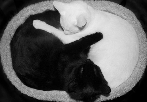 Μαύρες και άσπρες γάτες (12)