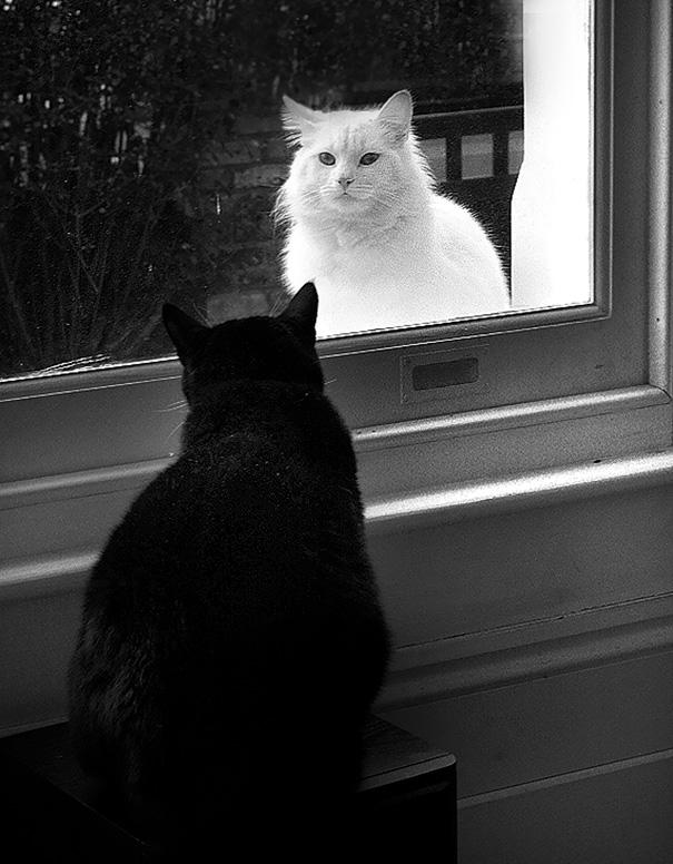 Μαύρες και άσπρες γάτες (13)