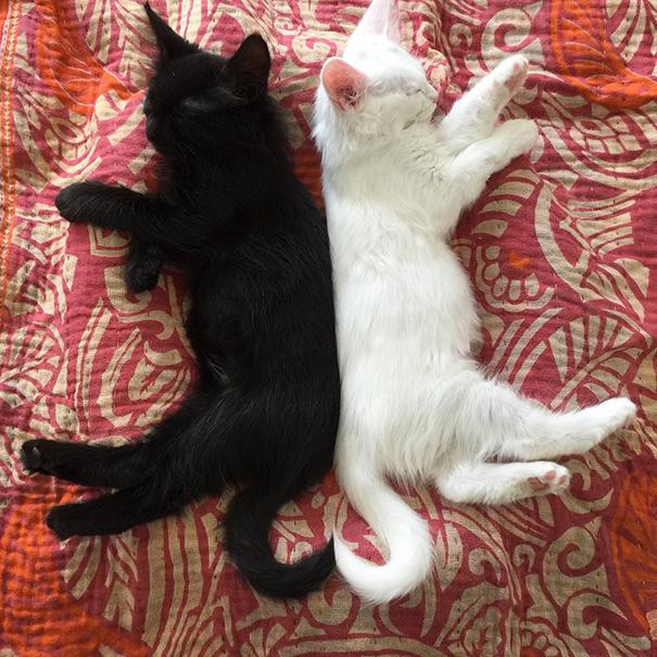 Μαύρες και άσπρες γάτες (14)