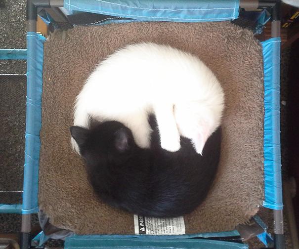 Μαύρες και άσπρες γάτες (15)