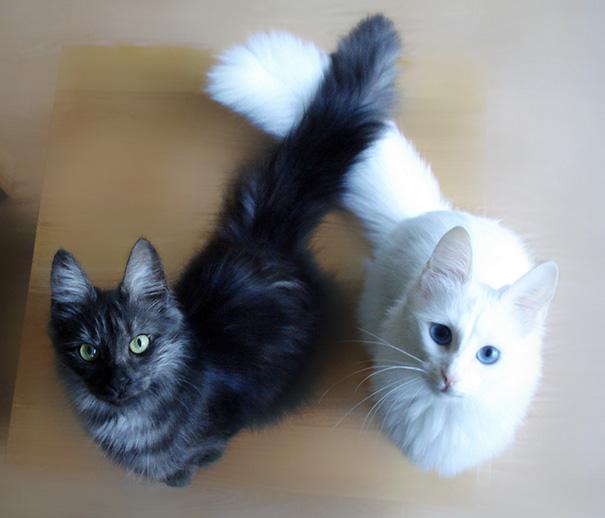 Μαύρες και άσπρες γάτες (16)