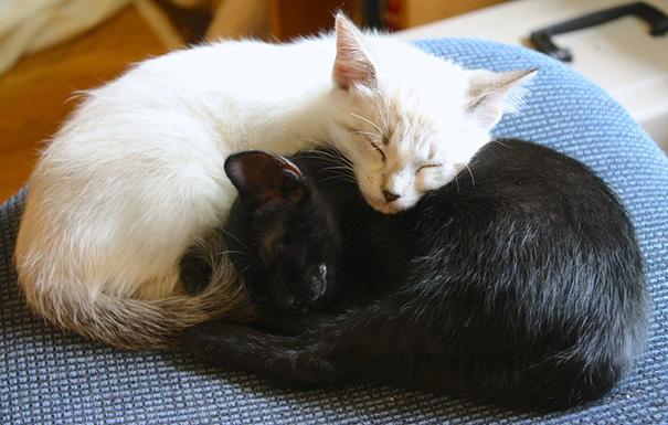 Μαύρες και άσπρες γάτες (17)