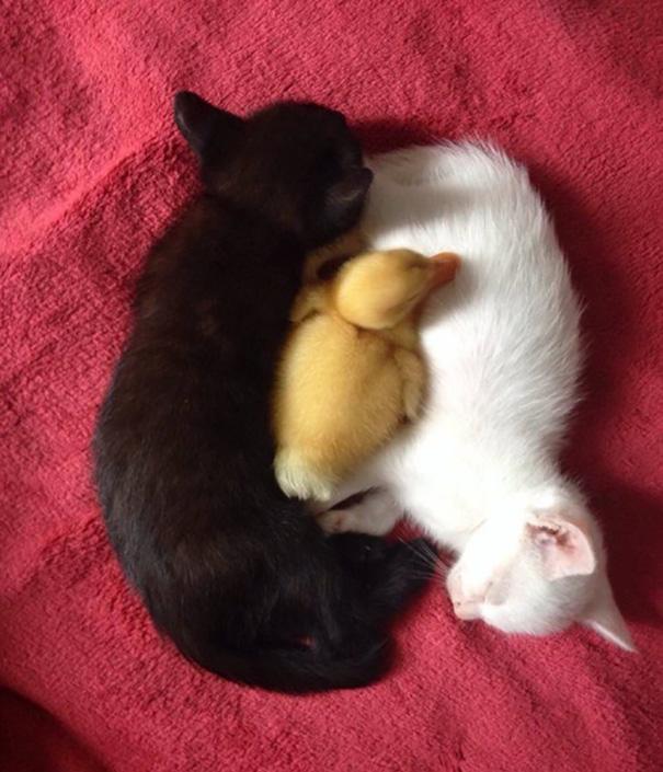 Μαύρες και άσπρες γάτες (18)