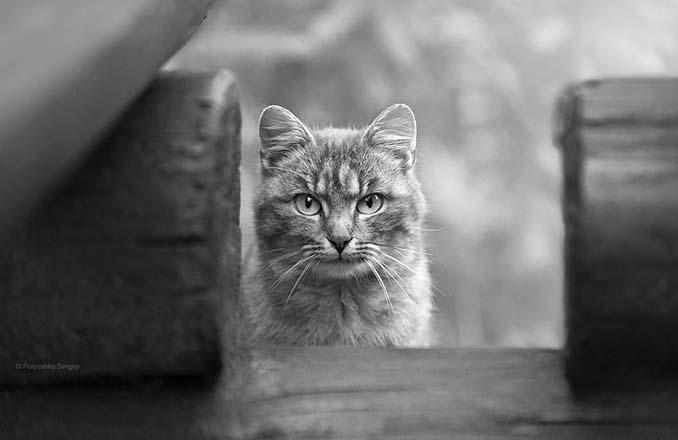 Ουκρανός φωτογράφος βγάζει μερικά από τα ωραιότερα πορτραίτα ζώων που έχετε δει (5)