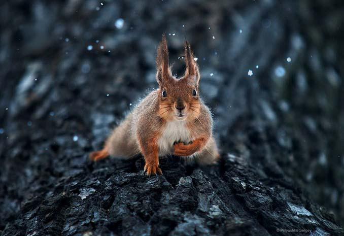 Ουκρανός φωτογράφος βγάζει μερικά από τα ωραιότερα πορτραίτα ζώων που έχετε δει (7)