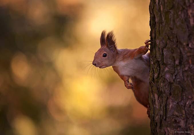 Ουκρανός φωτογράφος βγάζει μερικά από τα ωραιότερα πορτραίτα ζώων που έχετε δει (9)