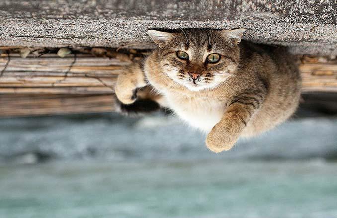 Ουκρανός φωτογράφος βγάζει μερικά από τα ωραιότερα πορτραίτα ζώων που έχετε δει (10)