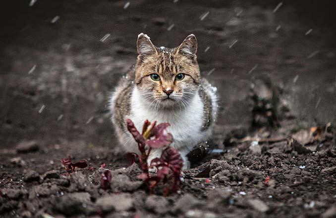 Ουκρανός φωτογράφος βγάζει μερικά από τα ωραιότερα πορτραίτα ζώων που έχετε δει (11)
