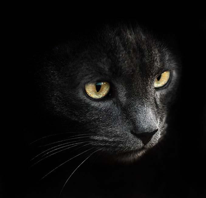 Ουκρανός φωτογράφος βγάζει μερικά από τα ωραιότερα πορτραίτα ζώων που έχετε δει (12)