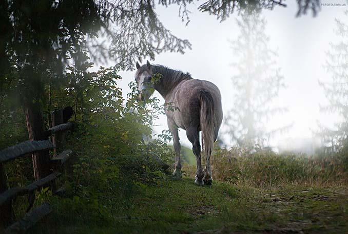 Ουκρανός φωτογράφος βγάζει μερικά από τα ωραιότερα πορτραίτα ζώων που έχετε δει (17)