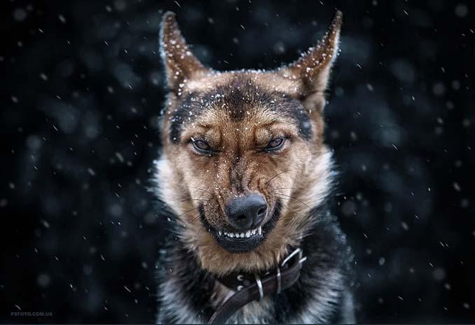 Ουκρανός φωτογράφος βγάζει μερικά από τα ωραιότερα πορτραίτα ζώων που έχετε δει (19)