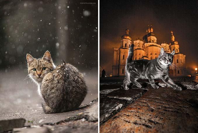 Ουκρανός φωτογράφος βγάζει μερικά από τα ωραιότερα πορτραίτα ζώων που έχετε δει (21)