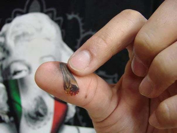 Παράξενα τατουάζ #16 (3)