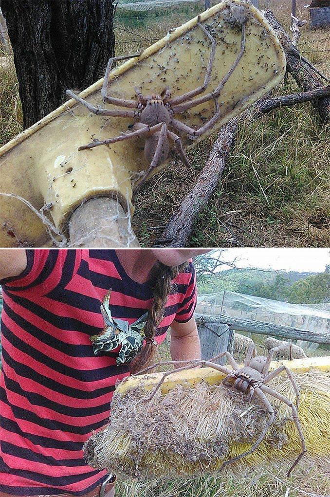 Ίσως η μεγαλύτερη αράχνη που έχετε δει   Φωτογραφία της ημέρας