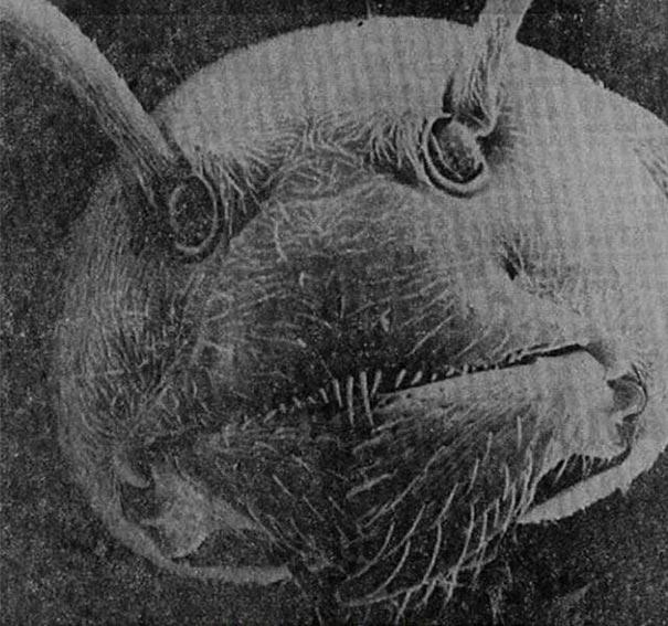 Το πρόσωπο ενός μυρμηγκιού σε ηλεκτρονικό μικροσκόπιο | Φωτογραφία της ημέρας