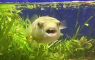 Ψάρι ενθουσιάζεται με την τροφή του