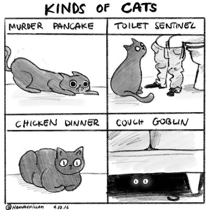 Σκιτσογράφος δείχνει πώς είναι να ζεις με γάτες (6)