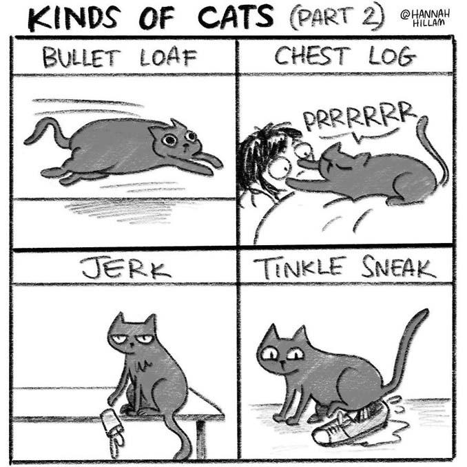 Σκιτσογράφος δείχνει πώς είναι να ζεις με γάτες (11)