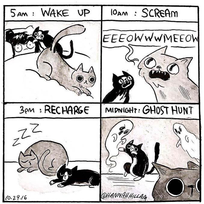 Σκιτσογράφος δείχνει πώς είναι να ζεις με γάτες (18)