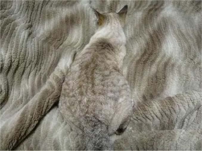 Ζώα που νομίζουν πως είναι άρχοντες του καμουφλάζ (6)