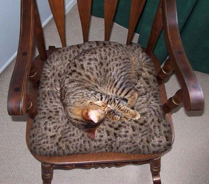 Ζώα που νομίζουν πως είναι άρχοντες του καμουφλάζ (11)