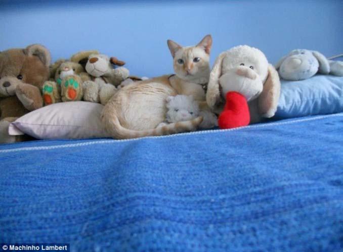 Ζώα που νομίζουν πως είναι άρχοντες του καμουφλάζ (13)