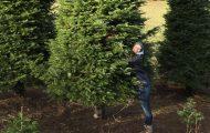 `Αγόρασαν ένα χριστουγεννιάτικο δέντρο ύψους 6 μέτρων και βρήκαν έναν έξυπνο τρόπο να το χωρέσουν στο σπίτι (3)