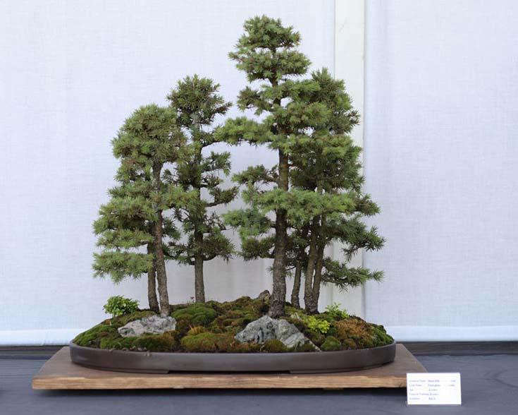 Δάση από Μπονσάι (1)