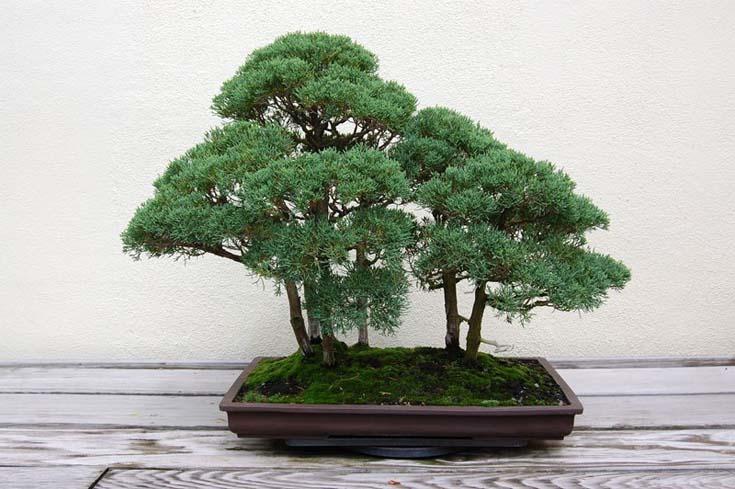 Δάση από Μπονσάι (2)