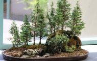 Δάση από Μπονσάι (3)