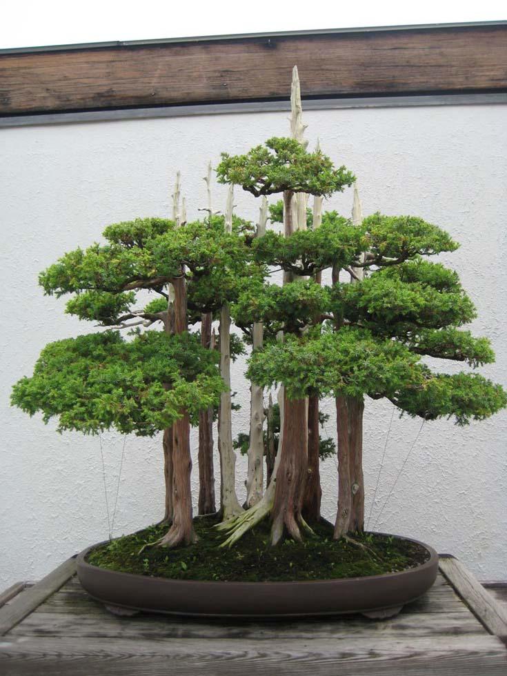 Δάση από Μπονσάι (6)
