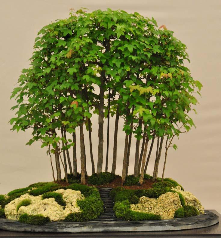 Δάση από Μπονσάι (8)