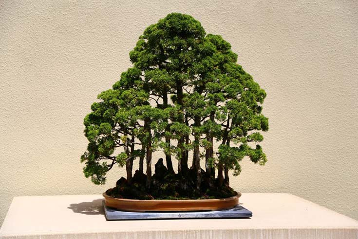 Δάση από Μπονσάι (10)