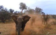 Επιθέσεις ζώων που κατέγραψε η κάμερα