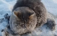 Γάτα που είχε κολλήσει στον πάγο σώθηκε την τελευταία στιγμή