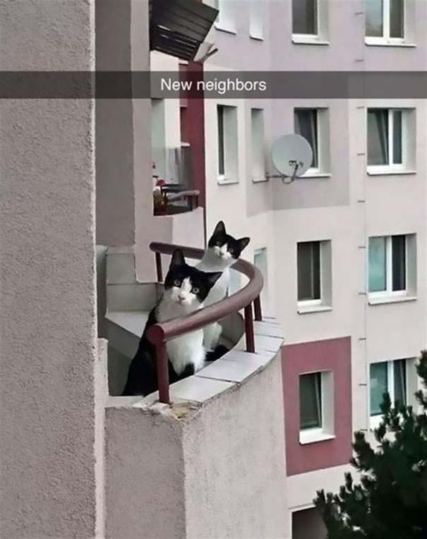 Γάτες που... κάνουν τα δικά τους! #39 (2)