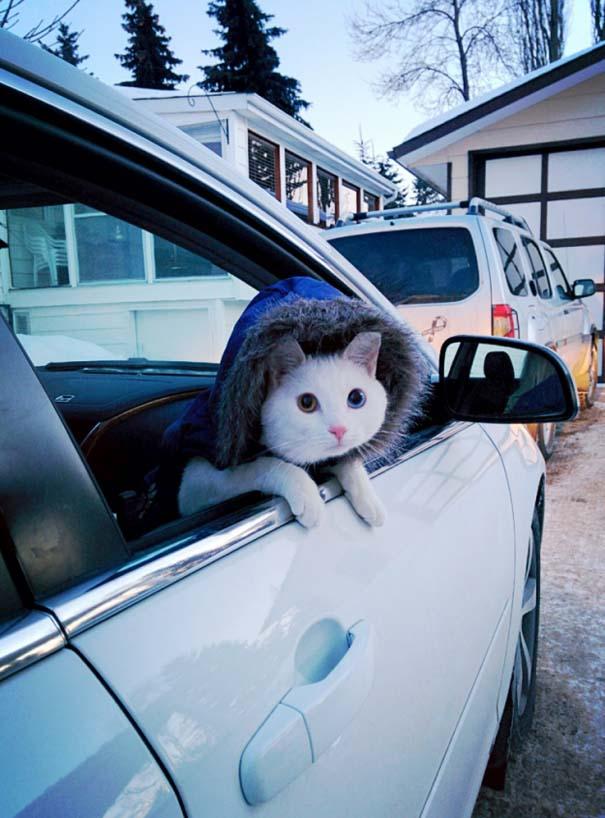 Γάτες που... κάνουν τα δικά τους! #39 (3)