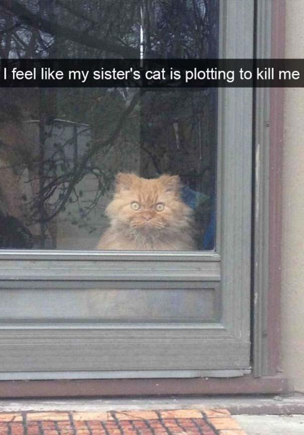 Γάτες που... κάνουν τα δικά τους! #39 (4)