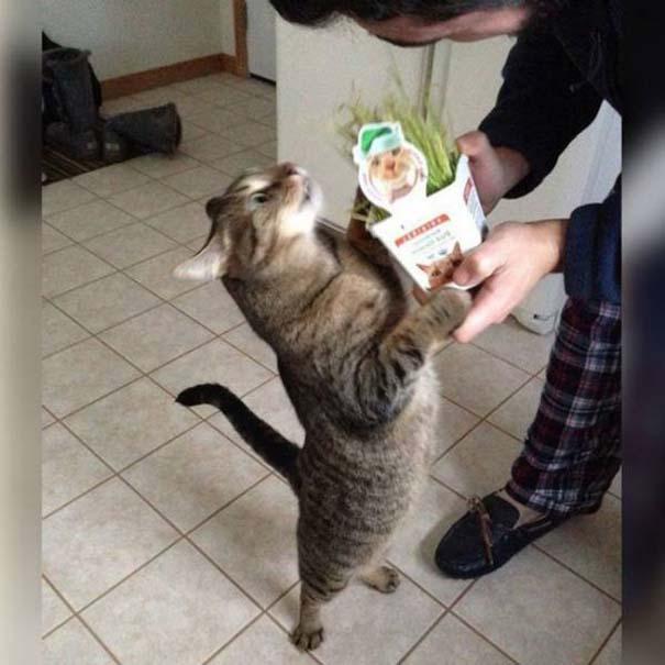 Γάτες που... κάνουν τα δικά τους! #39 (5)