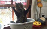 Γάτες που... κάνουν τα δικά τους! #40 (3)
