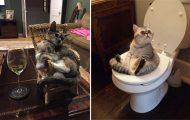 Γάτες που... κάνουν τα δικά τους! #39 (12)