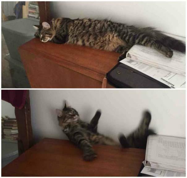 Γάτες που... κάνουν τα δικά τους! #39 (8)