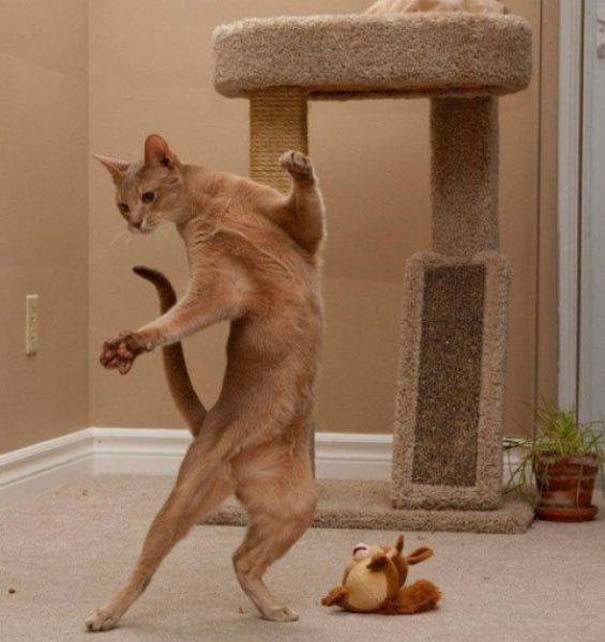 Γάτες που... κάνουν τα δικά τους! #39 (11)