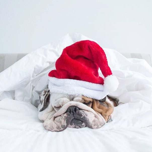 25+1 κατοικίδια που δεν ενθουσιάζονται στην ιδέα των Χριστουγέννων (10)