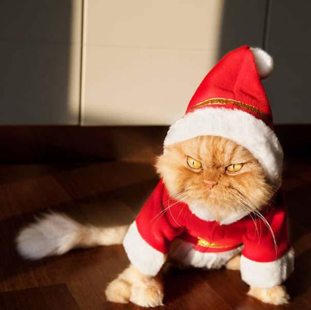 25+1 κατοικίδια που δεν ενθουσιάζονται στην ιδέα των Χριστουγέννων (12)