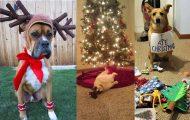 25+1 κατοικίδια που δεν ενθουσιάζονται στην ιδέα των Χριστουγέννων