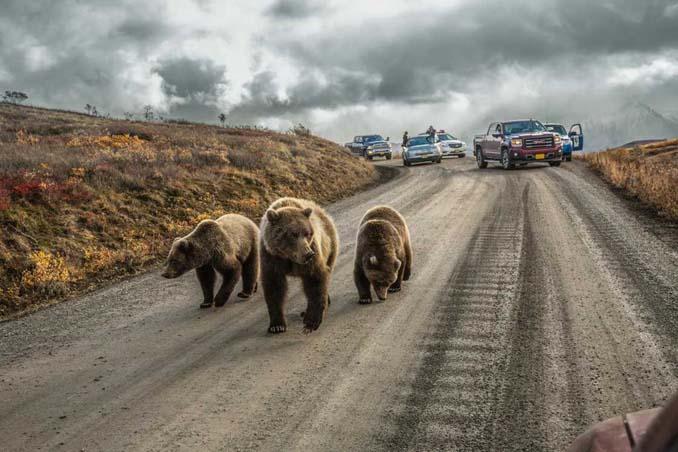 20 από τις κορυφαίες φωτογραφίες του National Geographic για το 2016 (1)