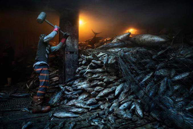 20 από τις κορυφαίες φωτογραφίες του National Geographic για το 2016 (2)