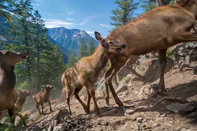 20 από τις κορυφαίες φωτογραφίες του National Geographic για το 2016 (12)